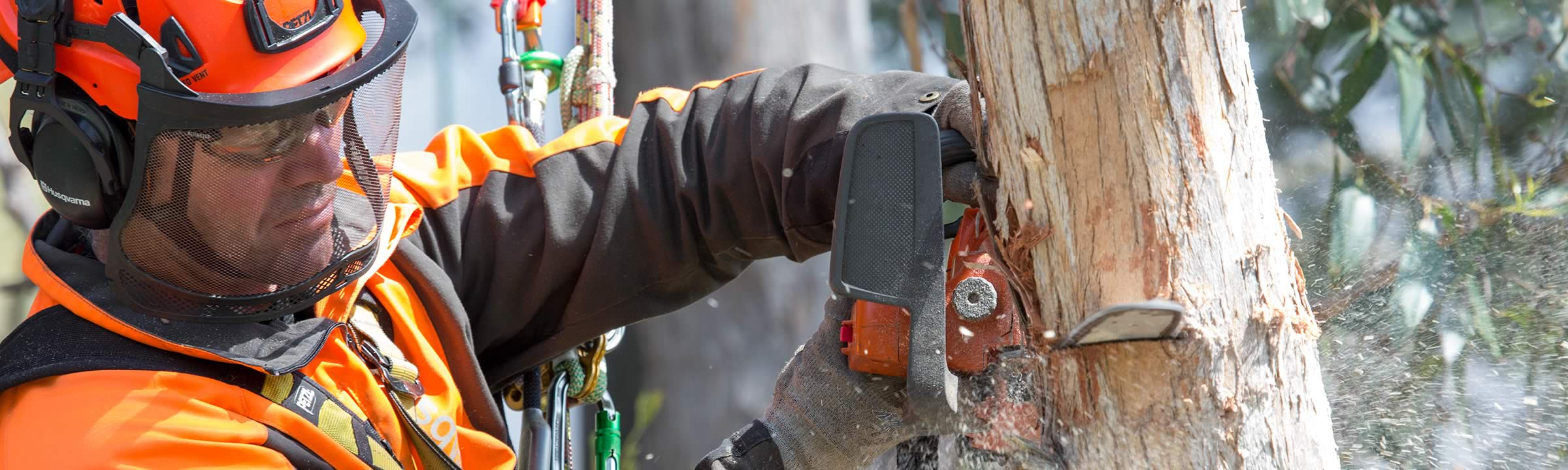 Arborist removing tree branch with chainsaw.